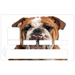 CB Bulldog